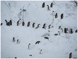 Antartikada Penguenleri izlemek